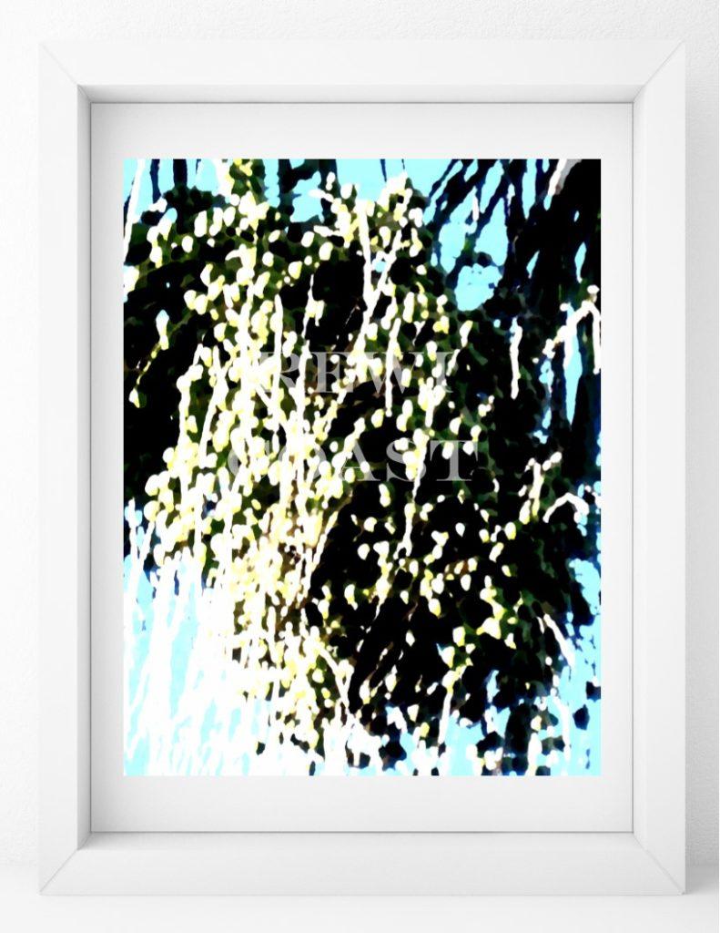 palmseeddisplay