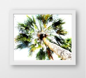 palmtreeupdisplay